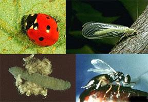 Biocontrol Image